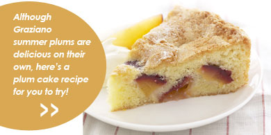 Although Graziano summer plums are delicious on their own here's a plum cake recipe for you to try!